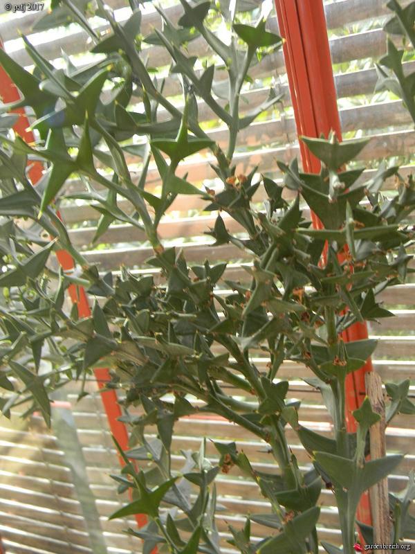 Les botanistes  - Page 2 GBPIX_photo_752134