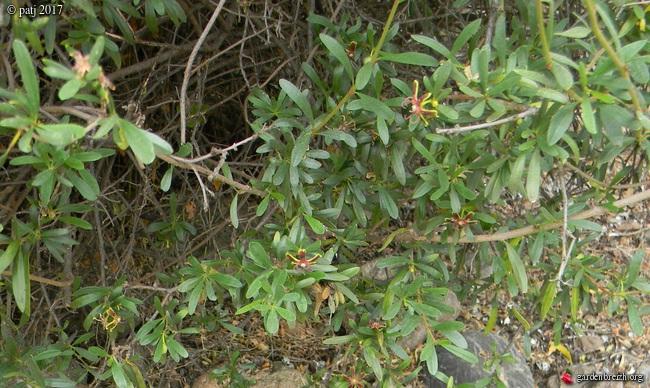 Les botanistes  - Page 8 GBPIX_photo_752439