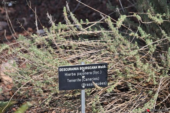 Les botanistes  - Page 8 GBPIX_photo_754501