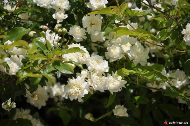 Les botanistes  - Page 6 GBPIX_photo_754770