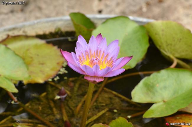 encore des beaux jours au jardin  - Page 2 GBPIX_photo_755984