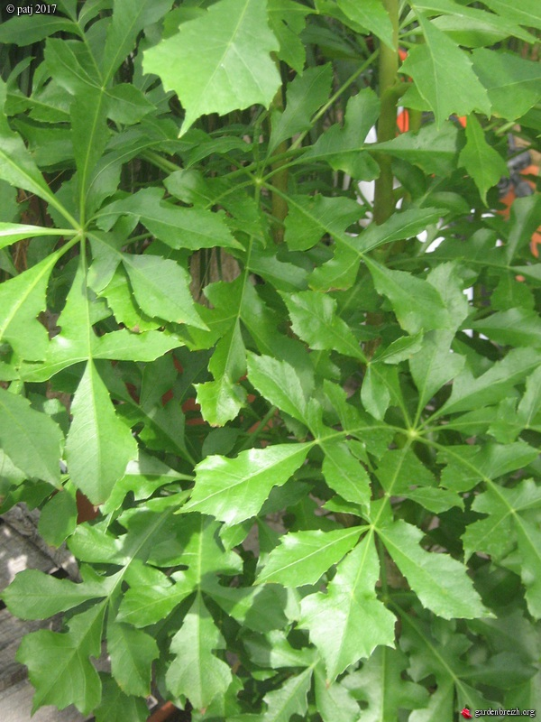 Les botanistes  - Page 8 GBPIX_photo_757076
