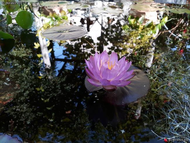 l'été indien des Fous Jardiniers - Page 2 GBPIX_photo_760053