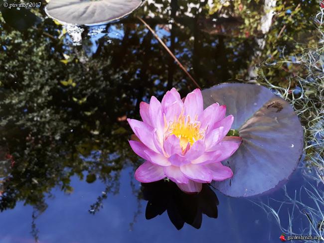 l'été indien des Fous Jardiniers - Page 2 GBPIX_photo_760054