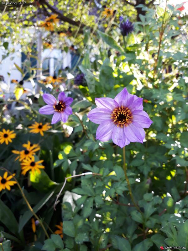 l'été indien des Fous Jardiniers - Page 2 GBPIX_photo_760057