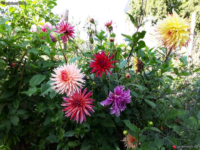 l'été indien des Fous Jardiniers - Page 2 GBPIX_photo_760059