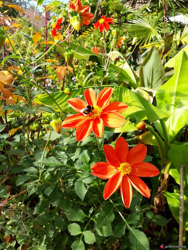 l'été indien des Fous Jardiniers - Page 2 GBPIX_photo_760061