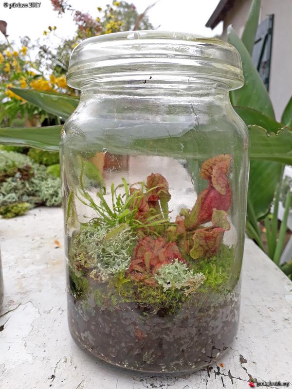 plantes carnivores rustiques - climat tempéré frais  - Page 7 GBPIX_photo_761809