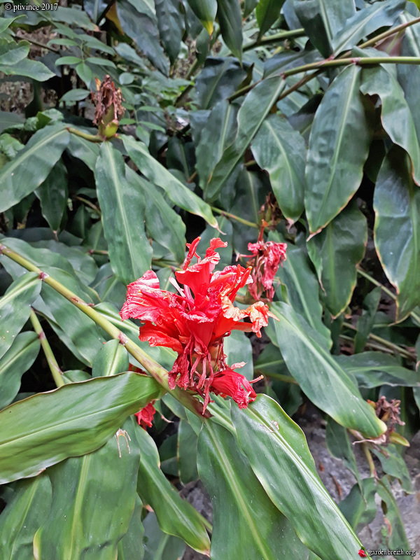 (06) Jardin des Serres de la Madone - Menton GBPIX_photo_761881