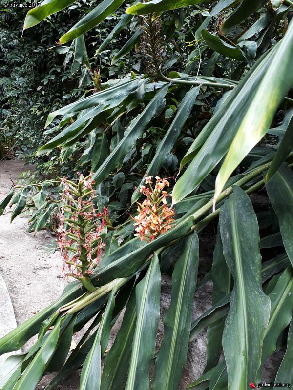 (06) Jardin des Serres de la Madone - Menton GBPIX_photo_761882