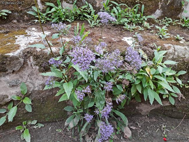 (06) Jardin des Serres de la Madone - Menton GBPIX_photo_761891