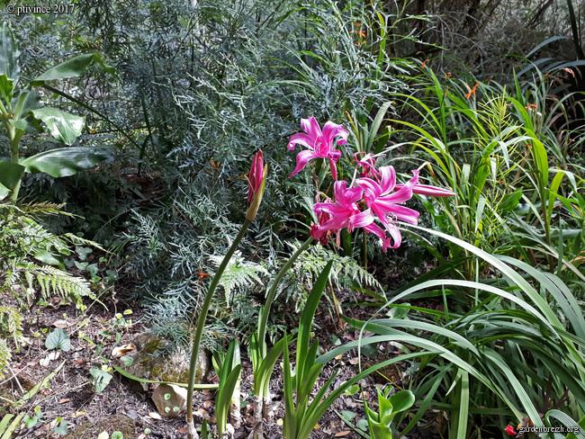 (06) Jardin des Serres de la Madone - Menton GBPIX_photo_761892