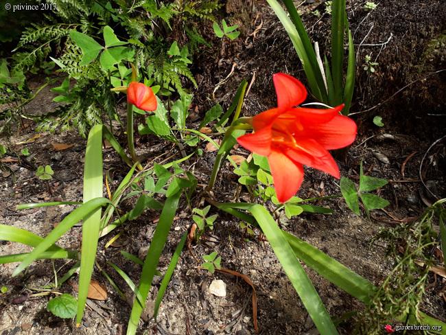 (06) Jardin des Serres de la Madone - Menton GBPIX_photo_761893