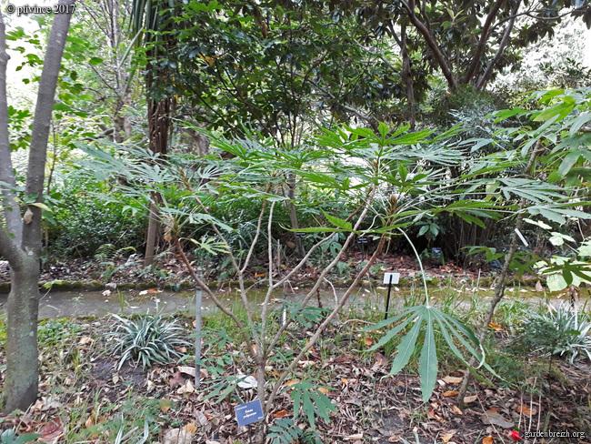 (06) Jardin des Serres de la Madone - Menton GBPIX_photo_761896