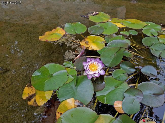 (06) Jardin des Serres de la Madone - Menton GBPIX_photo_761909