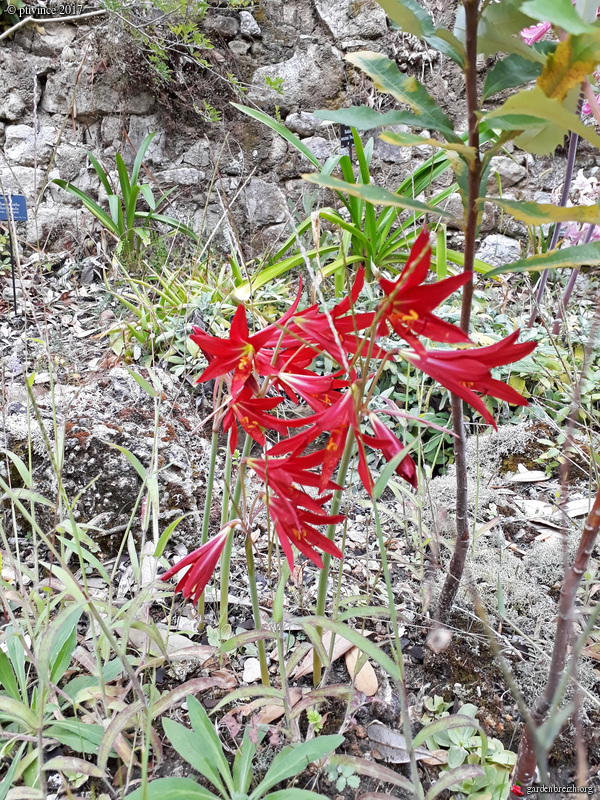 (06) Jardin des Serres de la Madone - Menton GBPIX_photo_761914