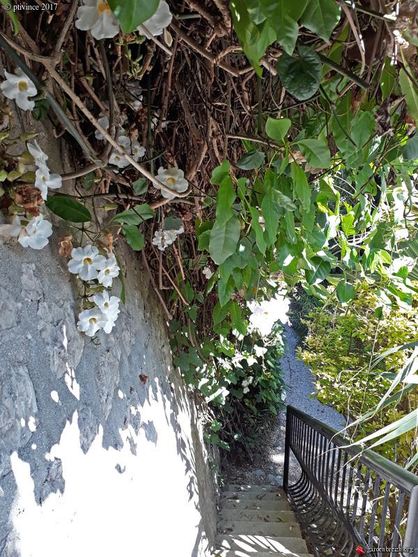 (06) Jardin du Val Rhameh - Menton GBPIX_photo_763090