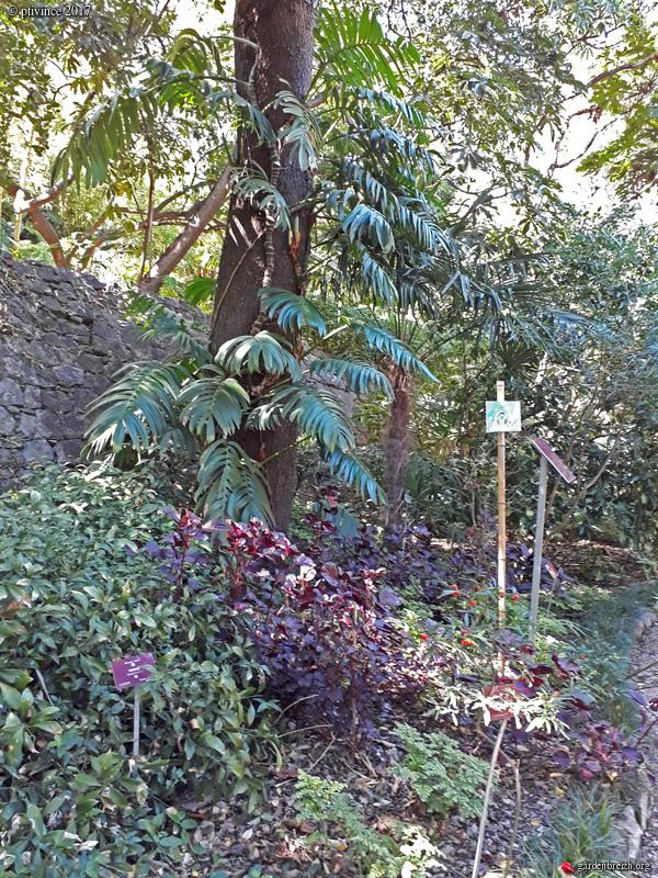 (06) Jardin du Val Rhameh - Menton GBPIX_photo_763093