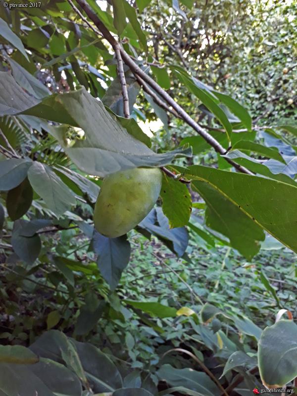 (06) Jardin du Val Rhameh - Menton GBPIX_photo_763094