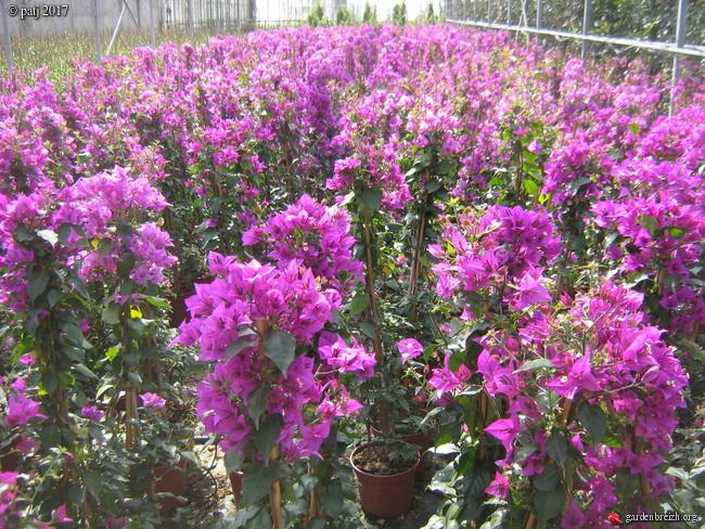 Les botanistes  - Page 2 GBPIX_photo_764649