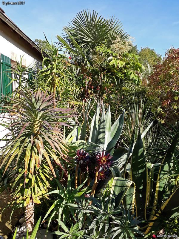 Yucca desmetiana GBPIX_photo_764741