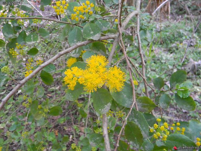 Les botanistes  - Page 5 GBPIX_photo_766430