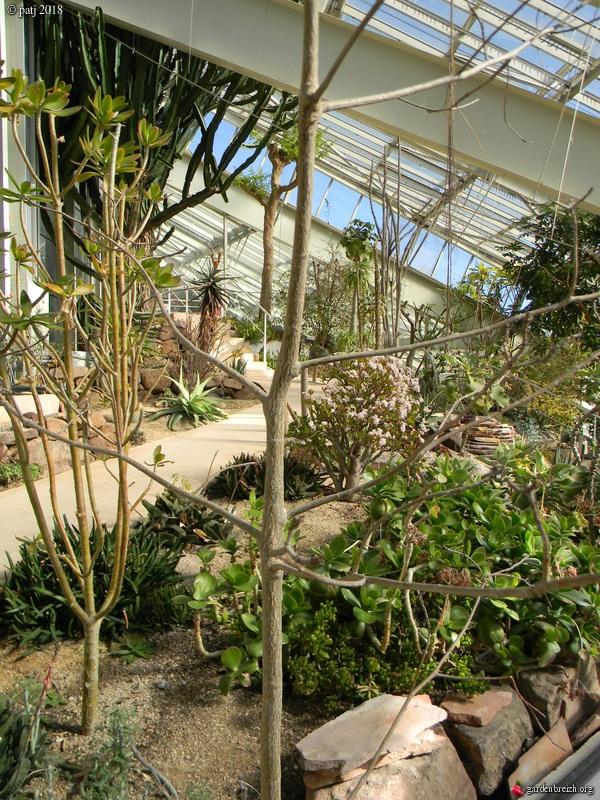 Adansonia le genre et les espèces GBPIX_photo_770253