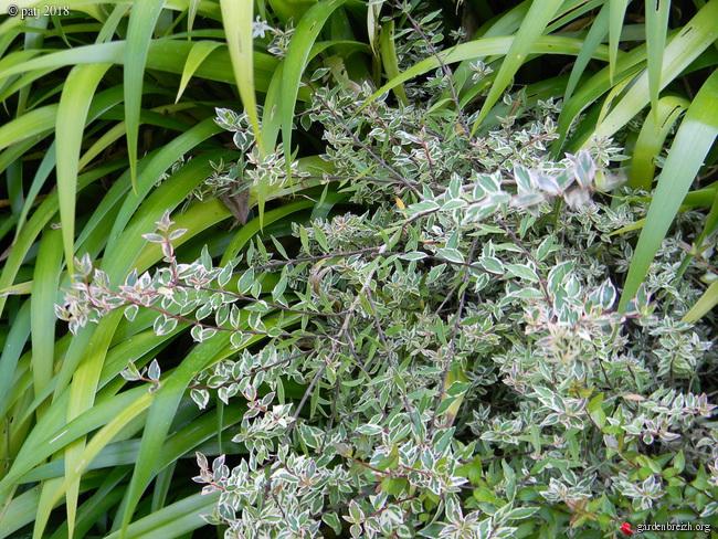 Les botanistes  - Page 4 GBPIX_photo_772107