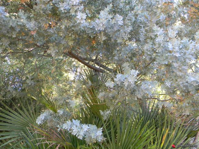 Les botanistes  - Page 6 GBPIX_photo_772120