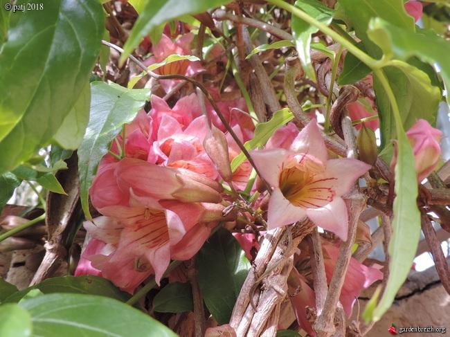 Les botanistes  - Page 7 GBPIX_photo_772948