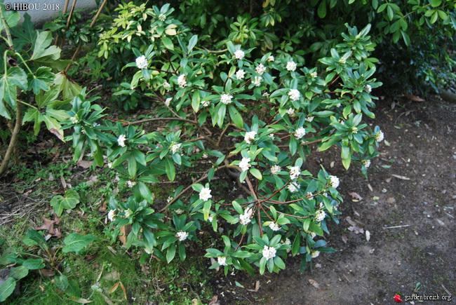 couleurs d'hiver au jardin  - Page 3 GBPIX_photo_773644