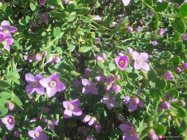 Les botanistes  - Page 8 GBPIX_photo_773655