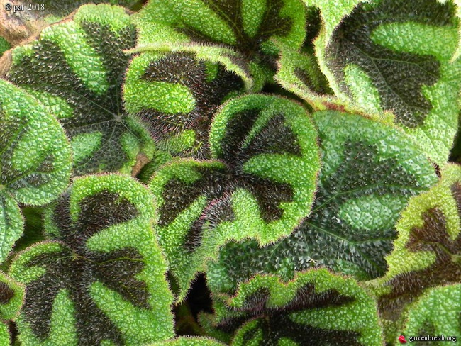 Les botanistes  - Page 6 GBPIX_photo_775491