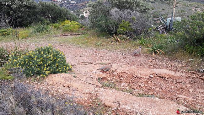 Grèce - tours et détours dans le Péloponnèse GBPIX_photo_778696