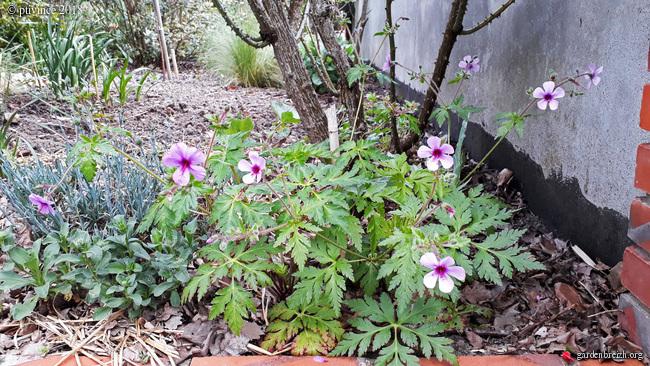les jardins sont beaux en mai ! - Page 2 GBPIX_photo_780921
