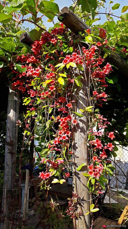 les jardins sont beaux en mai ! - Page 2 GBPIX_photo_780923