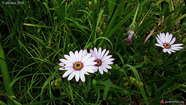les jardins sont beaux en mai ! - Page 2 GBPIX_photo_780924