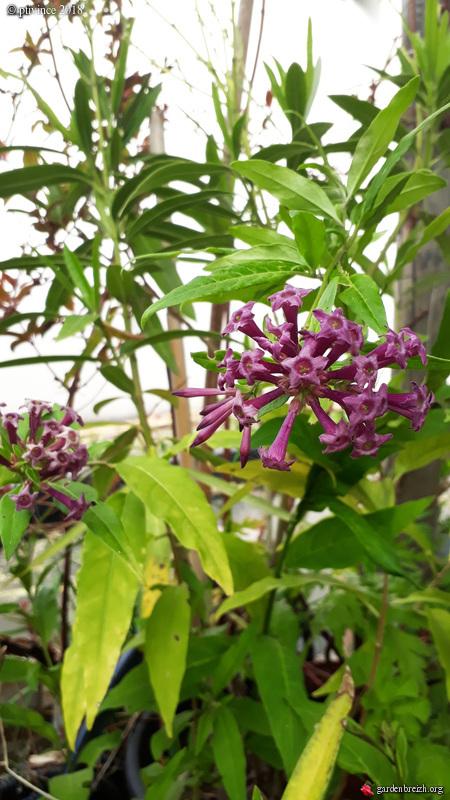 les jardins sont beaux en mai ! - Page 2 GBPIX_photo_780925