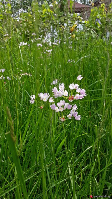 les jardins sont beaux en mai ! - Page 4 GBPIX_photo_781407