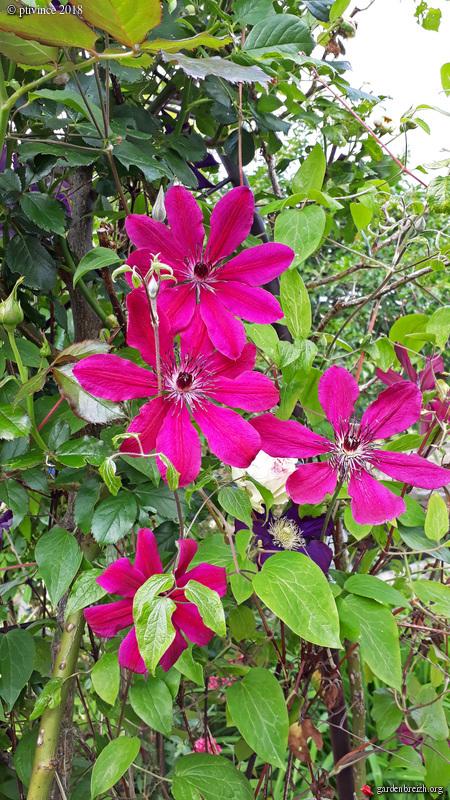les jardins sont beaux en mai ! - Page 4 GBPIX_photo_781408