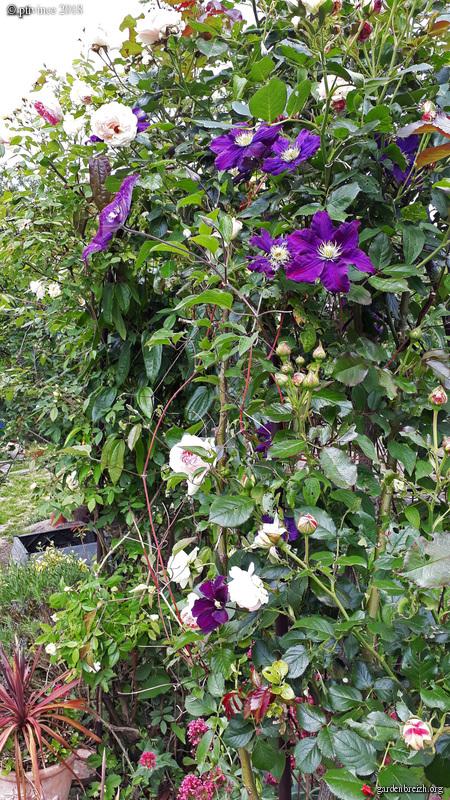 les jardins sont beaux en mai ! - Page 4 GBPIX_photo_781409