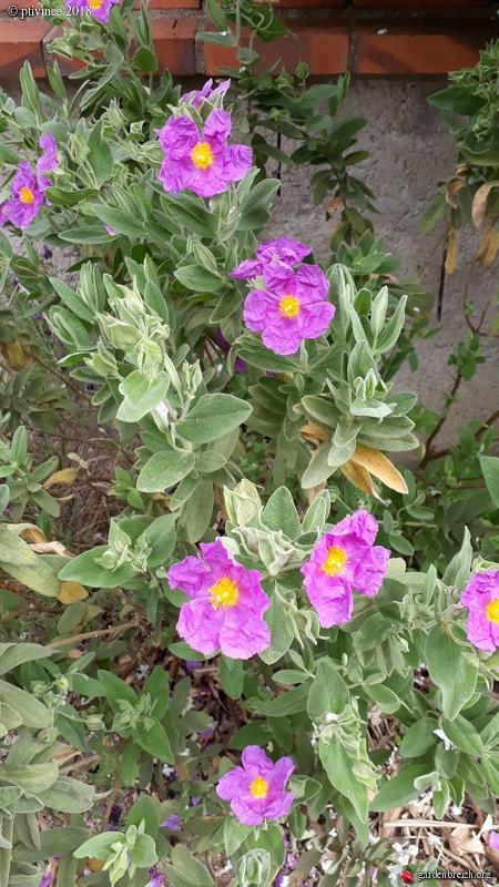 les jardins sont beaux en mai ! - Page 4 GBPIX_photo_781413