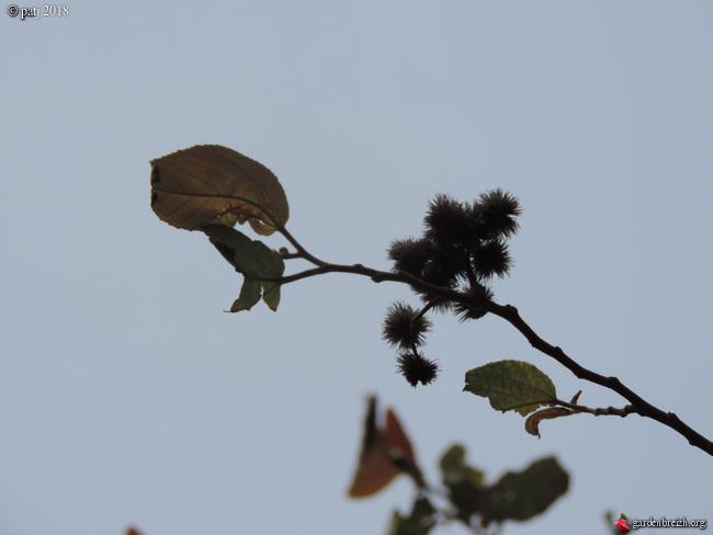 Les botanistes  - Page 2 GBPIX_photo_782023