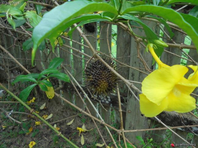 Les botanistes  - Page 5 GBPIX_photo_793705