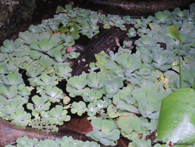 Les botanistes  - Page 8 GBPIX_photo_799915