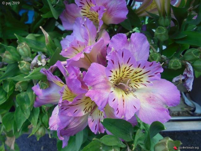 Les botanistes  - Page 5 GBPIX_photo_809313