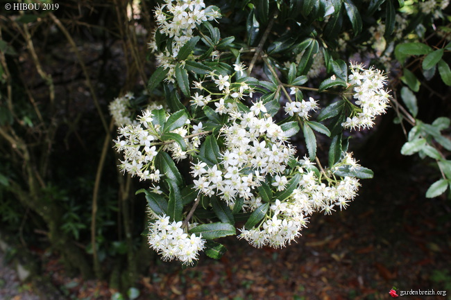 Irlande - Jardins d'Ilnacullin  - Page 2 GBPIX_photo_810071