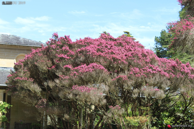 Irlande - Jardins d'Ilnacullin  GBPIX_photo_810116