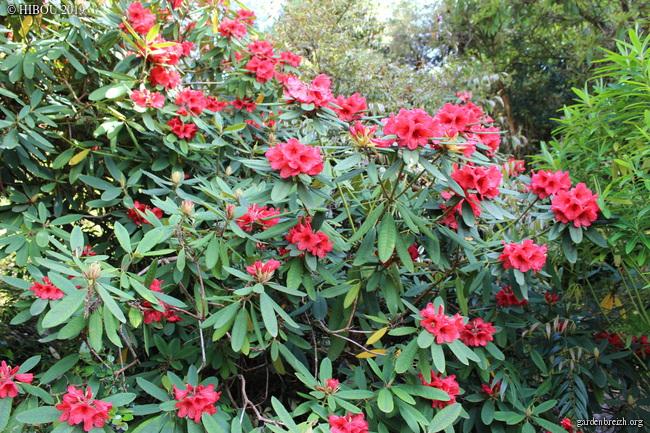 Irlande - Jardins d'Ilnacullin  GBPIX_photo_810654