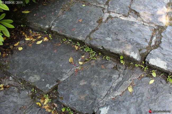 Irlande - Jardins d'Ilnacullin  - Page 2 GBPIX_photo_811734
